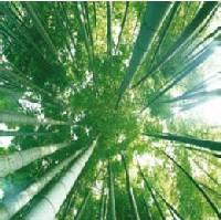 Cuadro Bambú