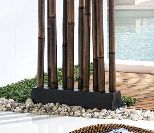 Bambu Decoracion Exterior ~ Parab?n Cactus  Parab?n Cactus