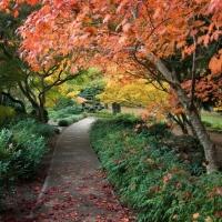 Cuadro de jardín japonés - Cuadro impreso
